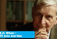 E.O. Wilson - Of Ants and Men