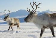Nature: Snowbound: Animals of Winter
