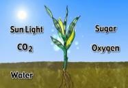 Activities of Plants
