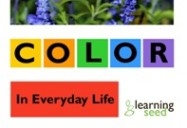 COLOR IN EVERYDAY LIFE