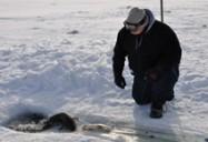 Newfoundland Moose: Jeremy Charles