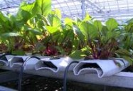 The World's First Rooftop Farm: Mohamed Hage
