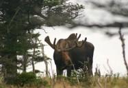 Highlands: The Wild, Wild East
