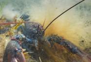 Crustaceans: The Wild, Wild East
