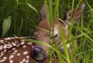 Deer: The Wild, Wild East