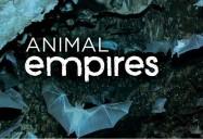 Infestation - Ants, Rats, Bats