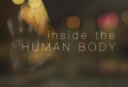 Inside the Human Body Series
