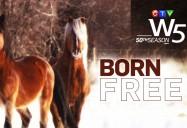 Born Free: W5