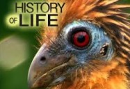 History of Life Series: A Study of Evolution