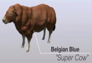 Superfoods: Genetic Manipulation
