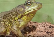 Wildlife: Canada's Natural Resources Series