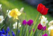Celebrate Spring Playlist
