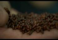 Bees Knees - Ep. 302: Planet Echo (Season 3)