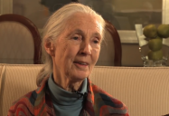 The Animals We Are: Jane Goodall - The Green Interview Series