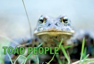 Toad People: What Does it Take to Save a Species? (52 Minute Version)