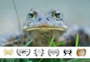Toad People: What Does it Take to Save a Species? (76 Minute Version)