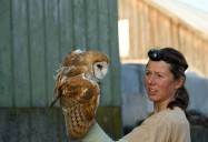 Silent Flight: Conserving the Barn Owl