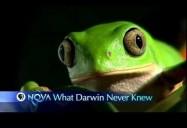 NOVA: What Darwin Never Knew