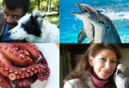 How Smart are Animals? NOVA scienceNOW
