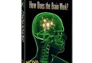 NOVA scienceNOW: How Does the Brain Work?