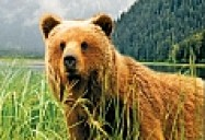 NATURE: Fortress of the Bears