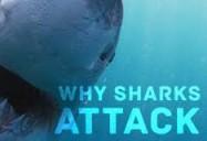 NOVA: Why Sharks Attack