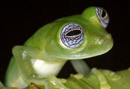 NATURE: Frogs: The Thin Green Line