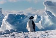 NOVA: Polar Extremes
