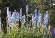 Origin and Diversity Of Plants
