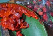 Passamaquoddy Bay Shellfish: Aerni Rossmount: Untamed Gourmet Series (Season 1)