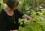 Healing Plants - Episode One: Ageless Gardens Series