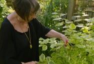 Healing Plants - Episode One: Ageless Gardens Series