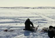 Etthén Heldeli: Caribou Eaters
