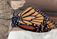 Biodiversity: Understanding Life Systems Series