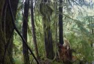 La Conservation des Ours (Bear Conservation): L' Esprit des Ours (The Spirit of the Bears)