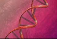 Bioinformatics, Genomics, and Proteomics: Getting the Big Picture