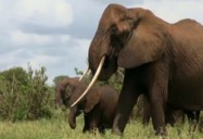 Where Have All the Elephants Gone? Poaching in Tanzania and Kenya