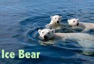 Ice Bear
