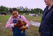 Farm Animals: Finding Stuff Out (Season 5)