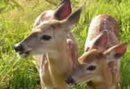 A New Hope: Hope for Wildlife - Season 1