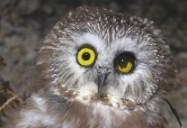 Gala: Hope for Wildlife - Season 1