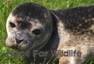Chase the Seal: Hope for Wildlife - Season 1