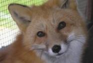 Copper: Hope for Wildlife - Season 1