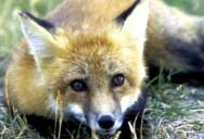 Open House: Hope for Wildlife - Season 1