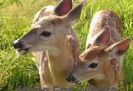 Deerly Beloved: Hope for Wildlife - Season 1