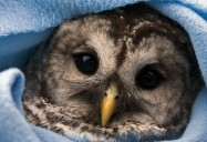 Second Chances: Hope for Wildlife - Season 2