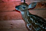 Deer Friends: Hope for Wildlife - Season 2