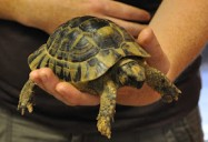 I Like Turtles: Hope for Wildlife - Season 2