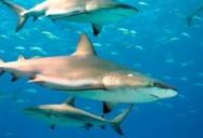 Sharks - Aquateam Series (Episode 10)