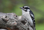 Point Pelee National Park: A Park For All Seasons Series